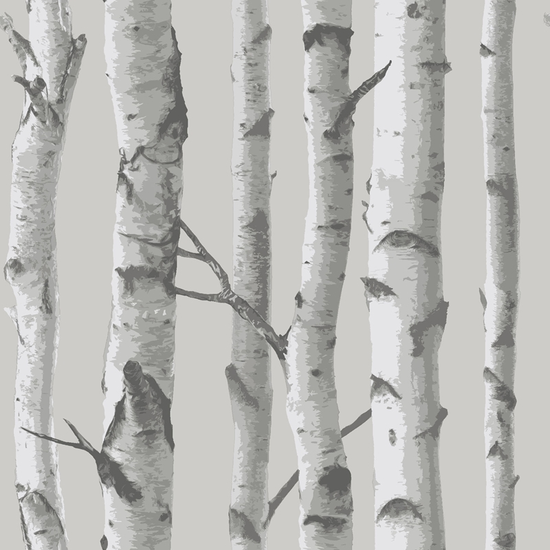 NU1694 Mountain Birch Grey , Faux Wood Peel and St